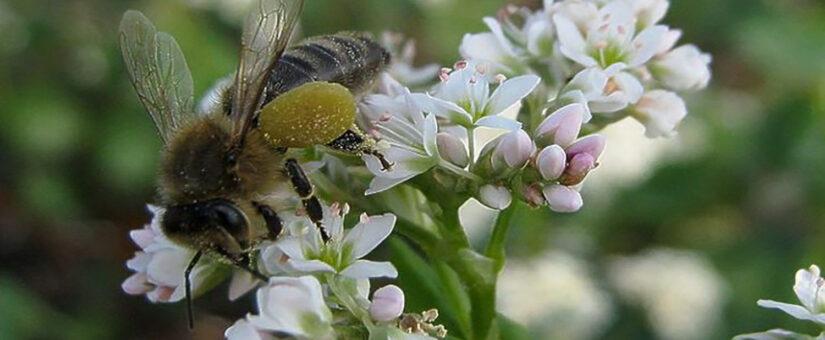 Пестициды и агрохимикаты вернутся под контроль Россельхознадзора